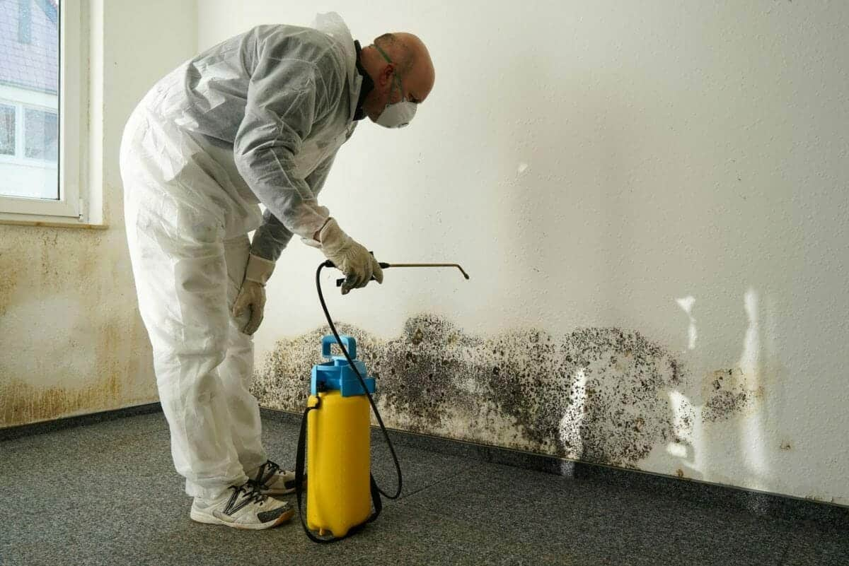 auckland-mould-removal